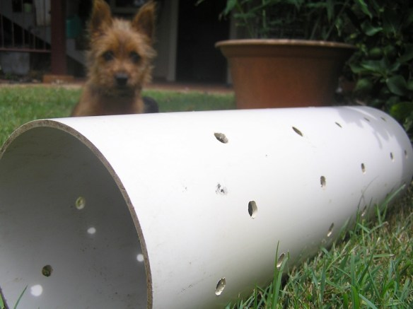Could this worm tower solve Phils dog poo dilemma?