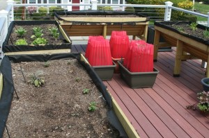 Raised vegetable beds on the rooftop garden deck