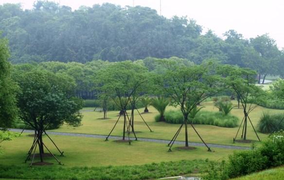 Shanghai-Chenshan-Botanical-Garden 2