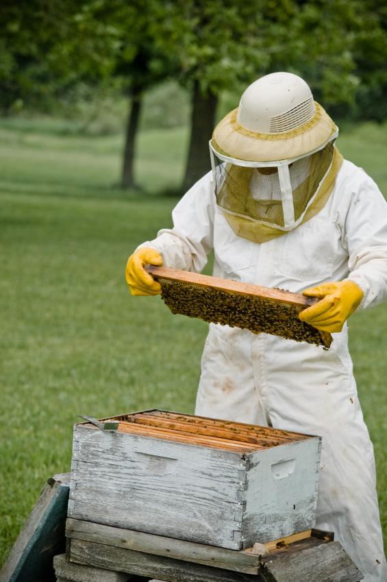 Beekeeper_iStock