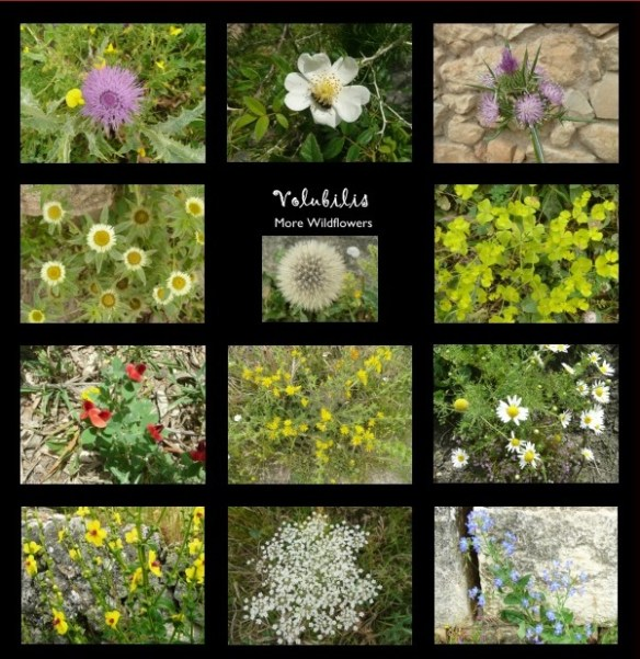 More flowers from Volubilis