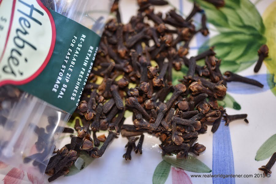 How to grow cloves - GardenDrum