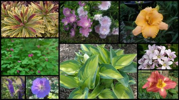 Plants for bright, partial shade