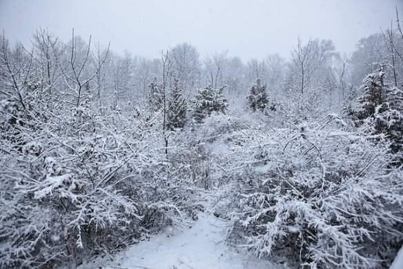 December 2013 winter storm Photo Anthony Quintano