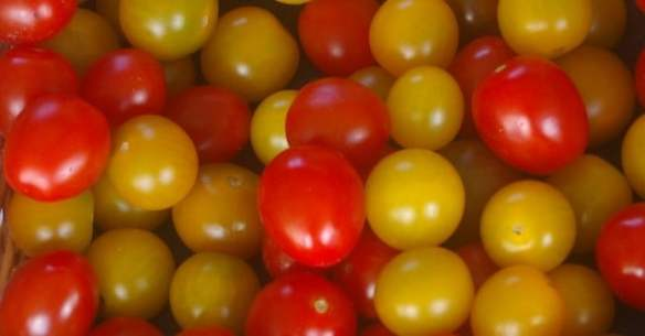 Cherry tomatoes come in a diversity of colours