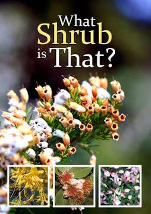 what-shrub-is-that