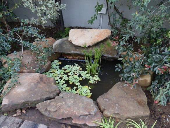 Small pond water feature