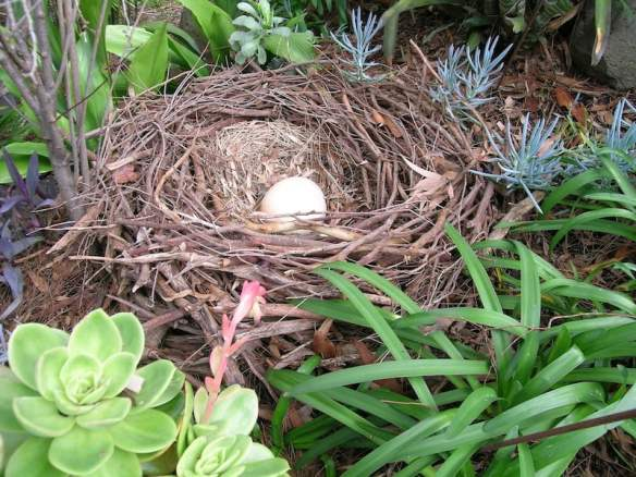 Birds nest made from dropped twigs
