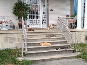Seven cats on the front porch. Photo Bart Everson