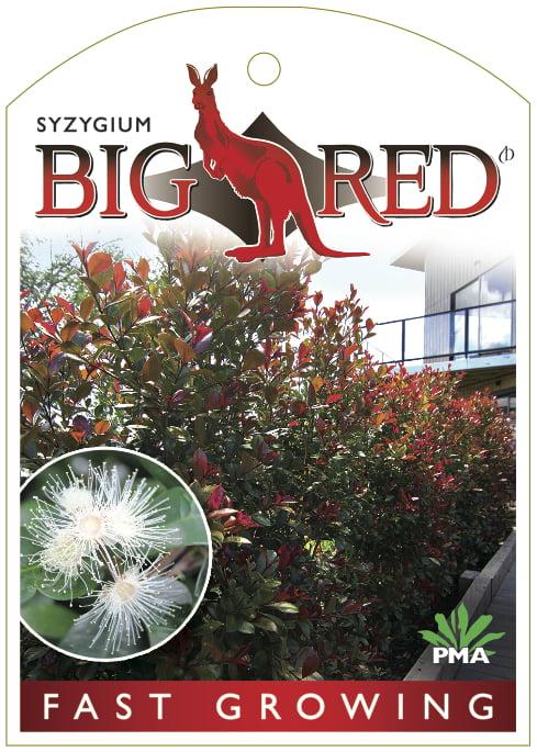 Syzygium Big Red Label Front Print