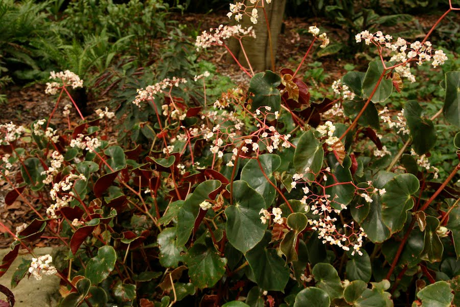 Top 10 Plants For Subtropical Shade Gardendrum