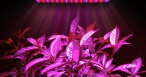 pink grow lights
