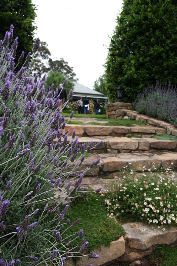 Lavender, Creeping Thyme and Seaside Daisy growing on hand-hewn granite steps at Lathiki in Euroa