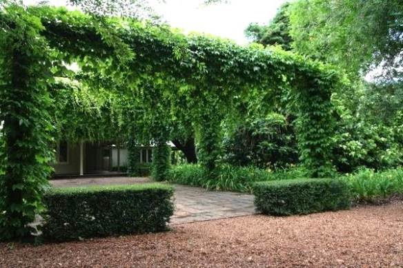 A stately Boston ivy entryway at Killeen