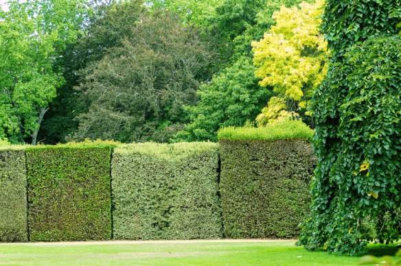 Wombat Park's tapestry hedge