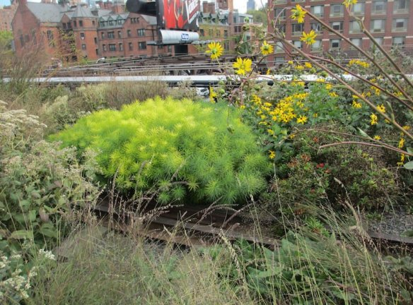 New York's famous High Line