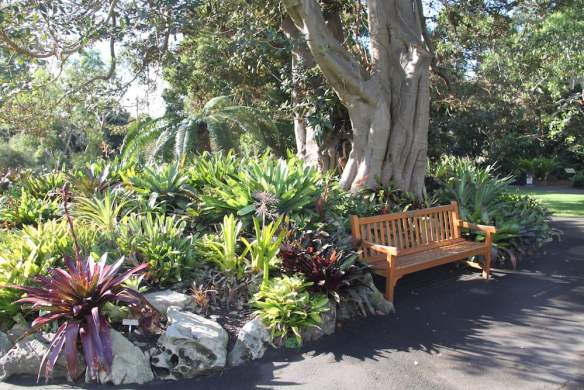 The Royal Botanic Gardens, Sydney are a great place to look for plant ideas. Photo: Janna Schreier
