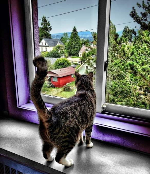 Cat enjoying the view