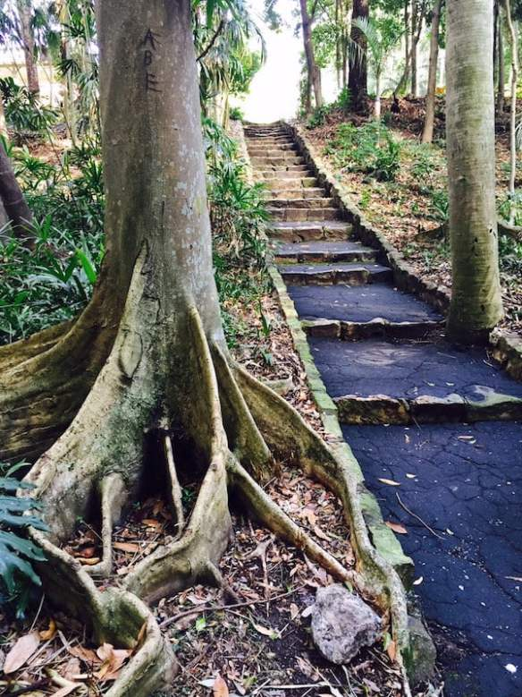 Rainforest garden stairs in Brisbane Botanic Gardens Photo Mary Jo Katter