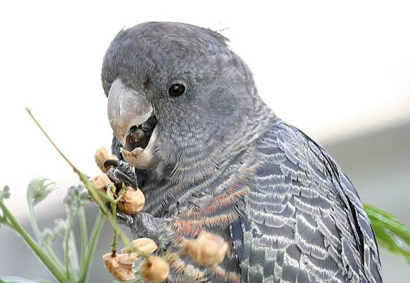 3 Bird 01
