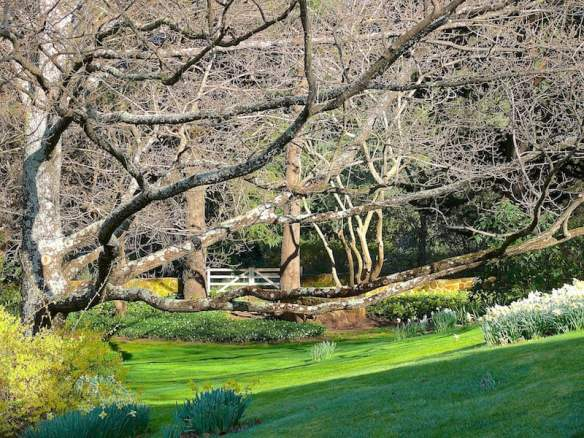 The woodland springs to life in early spring with bulbs and early-flowering shrubs. English oak branches hug the hill and frame the gate leading to the wild garden