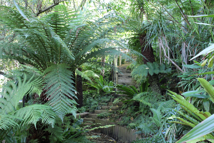 Growing native ferns in a shaded garden gardendrum for Native garden designs