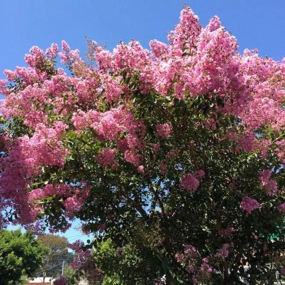 And deep pink!