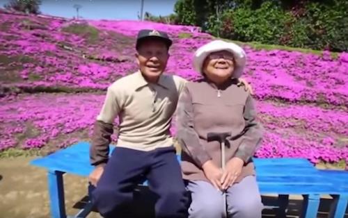 Kuroki phlox flower garden