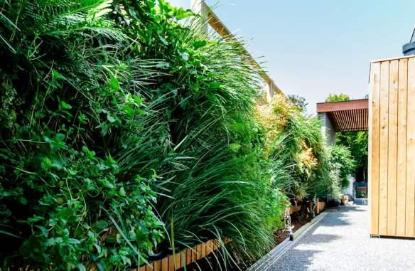 Vertical garden in Toorak, Melbourne. Design Phillip Withers Landscape Design