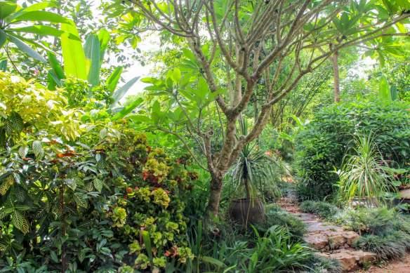 Pha Tad Ke Botanical Garden - path
