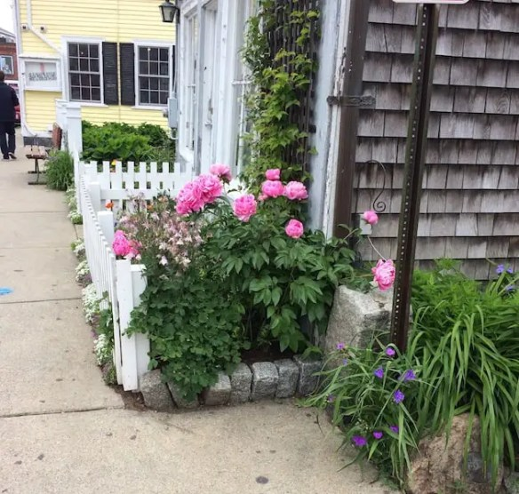 Roses and white picket fence