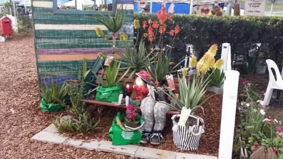 Aloes bloom in display garden