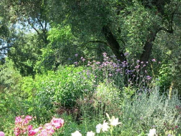 Flowering perennials beneath an ancient olive at Ninfa. Photo Raymond Rousset