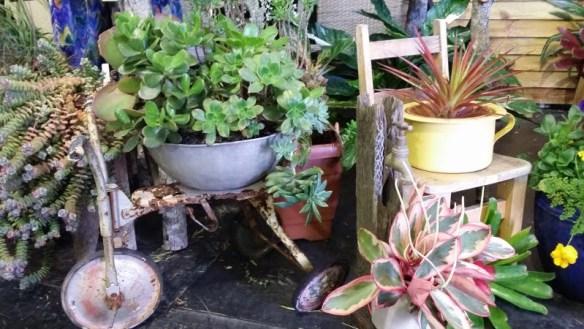 Nambour Garden Club display