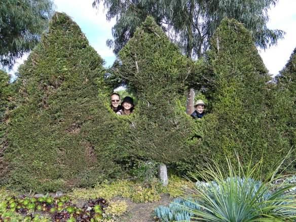 Peeking through the hedge at Attila Kapitany's open garden