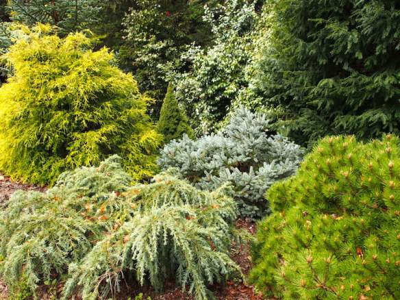 Conifer garden at Cloudehill garden, Victoria Australia