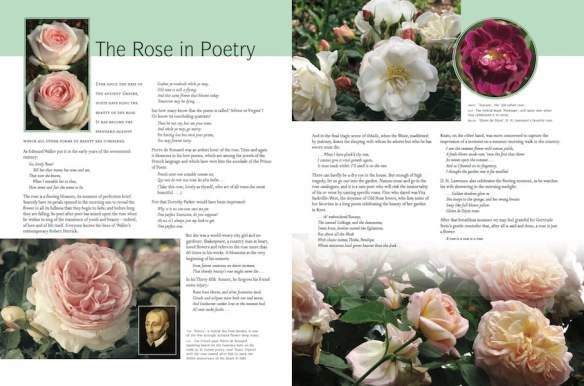 Macoboy's Roses pp130-131