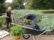 Maintaining the Great Broad Walk Border, Royal Botanic Garden Kew UK