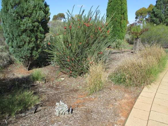 Diversity of plants in the Australian Arid Lands Botanic Garden
