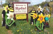 Daffodils at Rydal volunteers in 2014