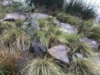 LV Landscape of the Year_Australian Ecosystems (3)