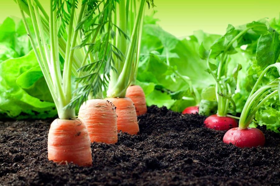 12-vegetales-que-cultivar-en-diciembre