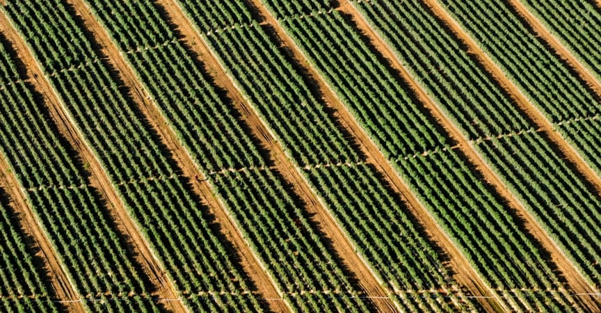 blog-jardineria-ventajas-del-riego-por-goteo-gardeneas-01
