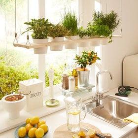 5-errores-plantas-interior-gardeneas-cocina