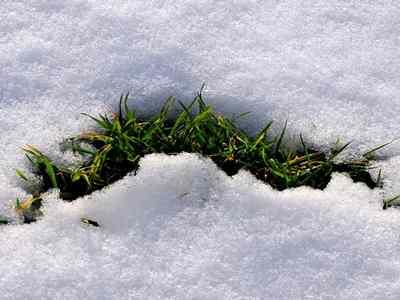 como-cuidar-cesped-invierno-nieve