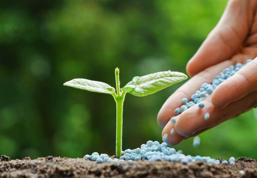 diccionario-jardineria-gardeneas-floracion