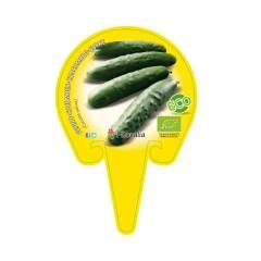 plantel-pepino