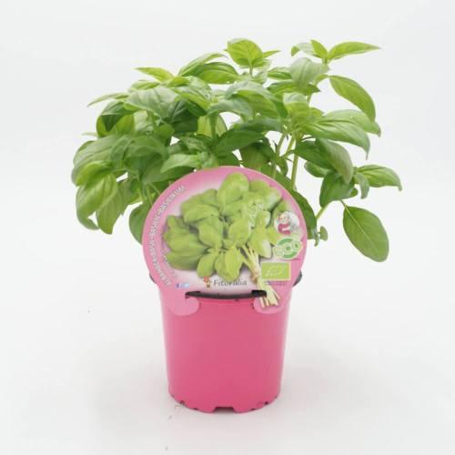 plantel-aromáticas