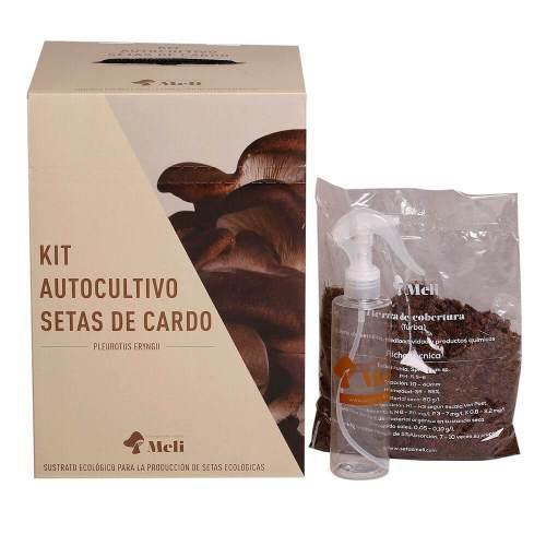 kit-autocultivo-setas-de-cardo-pleurotus-eryngii-gardeneas-3