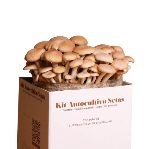 kit-autocultivo-setas-de-chopo-gardeneas-2